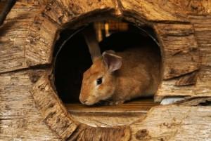 Rabbit exploring inside a hole